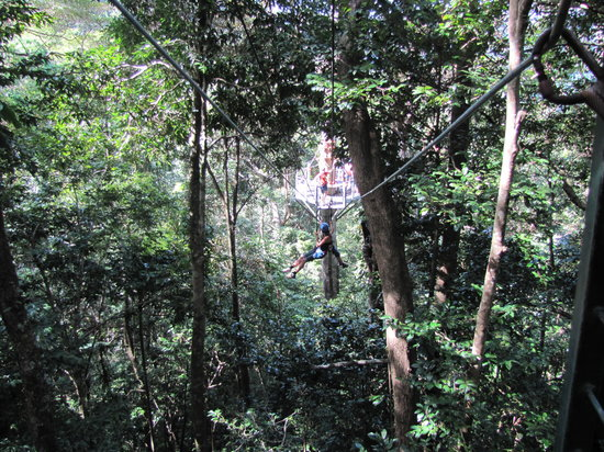 Cairns Region, Avustralya: Go jungle surfing... lot's of fun!