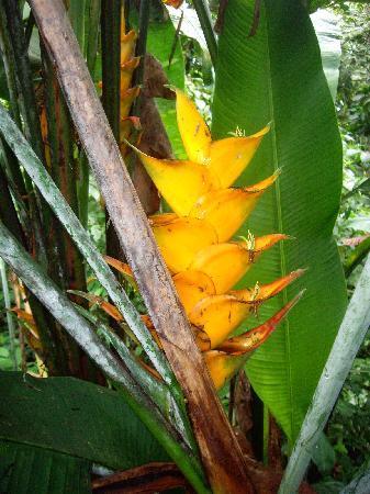 Bouillante, Guadeloupe : fleur
