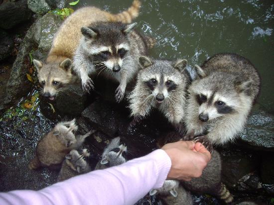 Bouillante, Guadalupe: toute une famille!!!