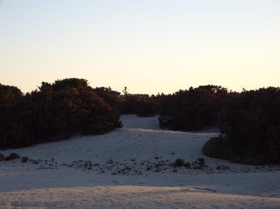 Faros Villa: Alyko cedar forest