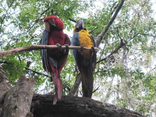 San Gil, Colombie : parrots