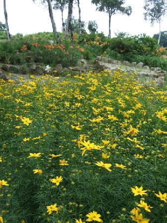 Yuzawa-machi, Japan: 多種の花が咲いていました
