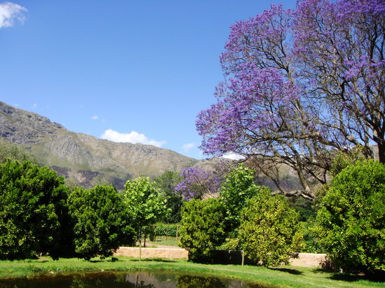 Franschhoek, South Africa: La Petite Dauphine Vineyard