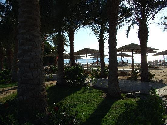 Fort Arabesque Resort, Spa & Villas: Gorgeous Gardens