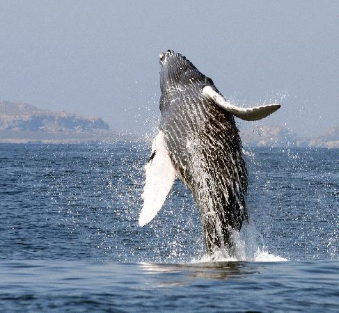 Surf Mex: Humpback Whales