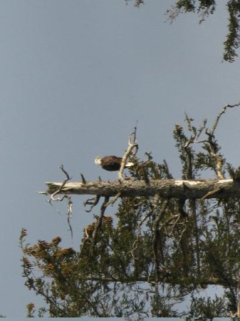 Alaska's Sadie Cove Wilderness Lodge: Bald eagles