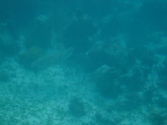 Providenciales: Turtle!  Submarine ride