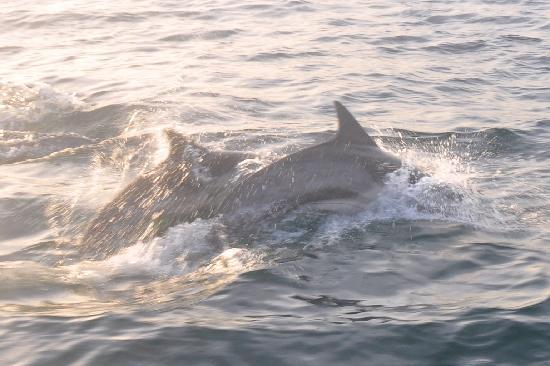 Dana Point, CA: Two of 100's of dolphins we saw