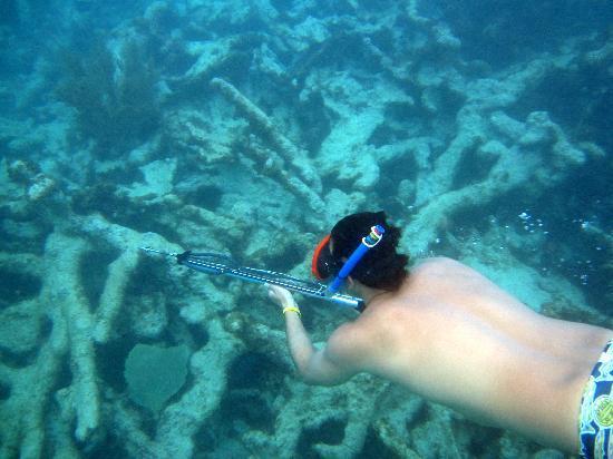 Heather's: snorkeling