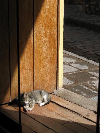 Pirwa Suecia Bed & Breakfast: Hotel kitten
