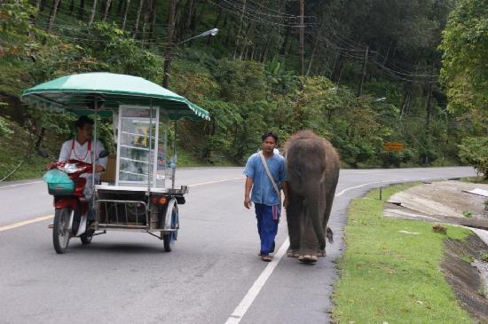 Pacific Club Resort : rencontre d'un éléphant