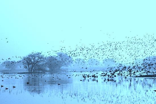 Sultanpur National Park Bird Sanctuary: Waterbirds....