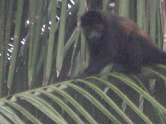 Casitas Azul Plata: Direkt vor Haus sin Affen