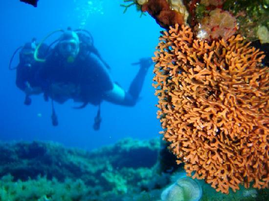 Corfu, Greece: reef diving