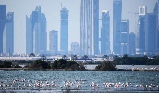 Ras Al Khor Wildlife Sanctuary: November flamingos