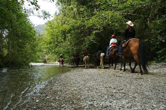 Clayoquot Wilderness Resort: Horseback Riding at Clayoquot