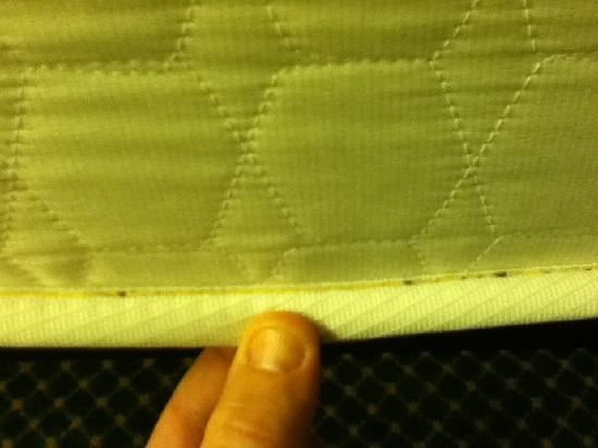 Motel 6 Savannah Midtown: Bed bugs on the mattress edge