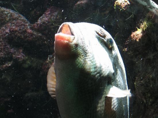 Bermuda Aquarium, Natural History Museum & Zoo: Glub glub glub....