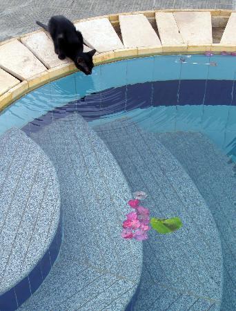 โรงแรมดาฉอบพลาซา: la piscine tot le matin