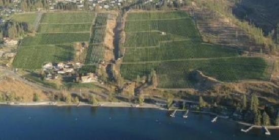 St Hubertus & Oak Bay Estate Winery: St Hubertus & Oak Bay Vineyard from Air
