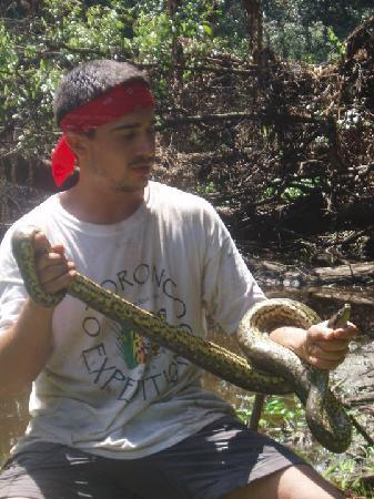Otorongo Amazon River Lodge: The guides were expert snake handlers