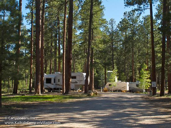 Kaibab Camper Village: Tall beautiful Ponderosa pines...