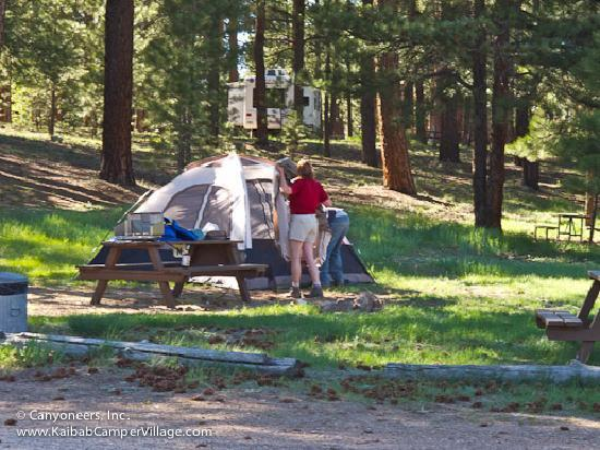 Kaibab Camper Village: Tent camping area.
