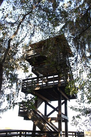 Micanopy, Flórida: Observation tower