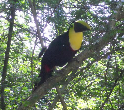 Hotel Playa Westfalia: plenty of wildlife & beautiful scenes