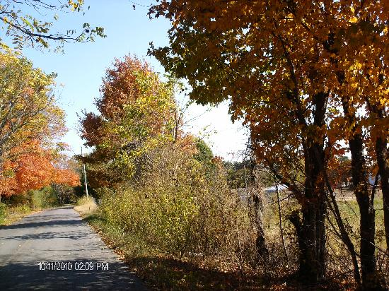 Motel 6 Kingston : Trees changing colors