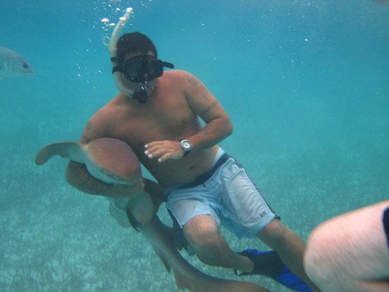Lil Alphonse Snorkeling: sharkie