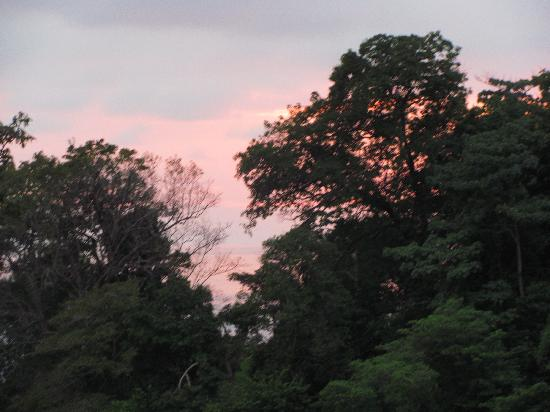 Shelter from the Storm: Sunset through the jungle
