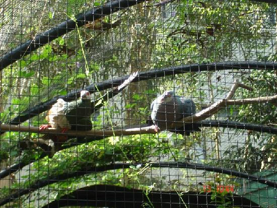 Negros Forests and Ecological Foundation Biodiversity Conservation Center: mating call
