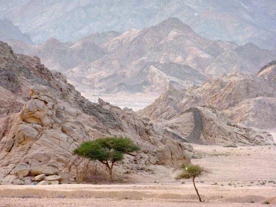 Iberotel Palace: Sinai