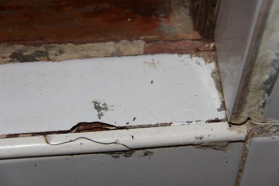 Orchid Resort Bailan: le passage des fourmis...