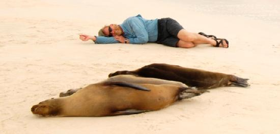 Santa Cruz, Ecuador: Ever took a nap next to sea lions?