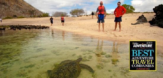 San Cristobal, Equador: Turtles coming to shore.