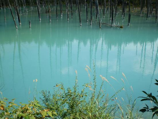 Biei-cho, Japon : 青い池1