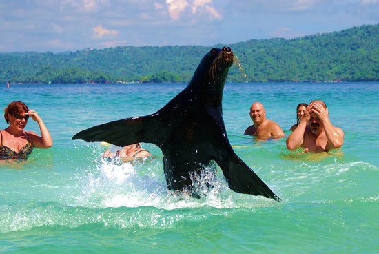 Santa Barbara de Samana, Den Dominikanske Republik: Swimming with Sea Lions at the Famous Island of Cayo Levantado in Samana