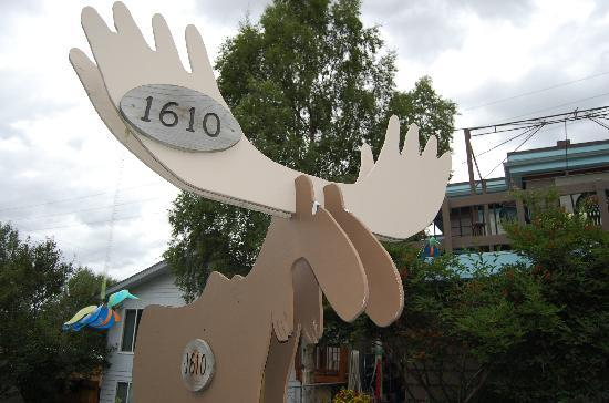Walkabout Town B&B: Walkabout Moose