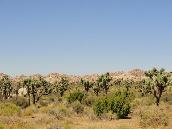 Twentynine Palms, Californien: Joshua Tree National Park