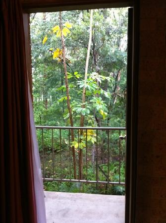 Sanctuary Resort Motor Inn: View from Room. Rain Forrest