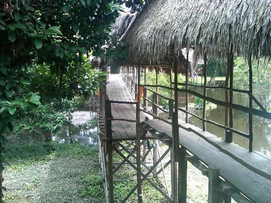 Amazon Refuge: The Lodge