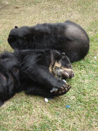 Parque de las Leyendas (Zoo): oso de anteojos mordiendo una botella lanzada por un joven