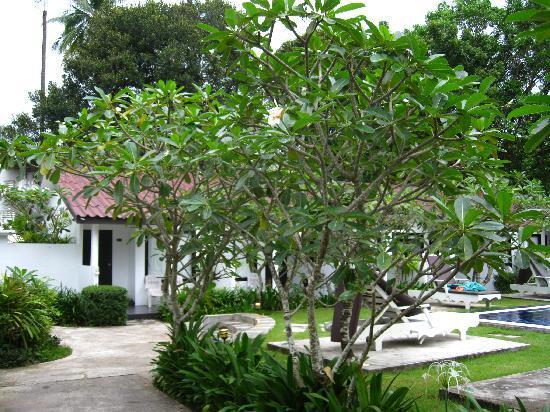 Nai Yang Beach Resort and Spa: Pool