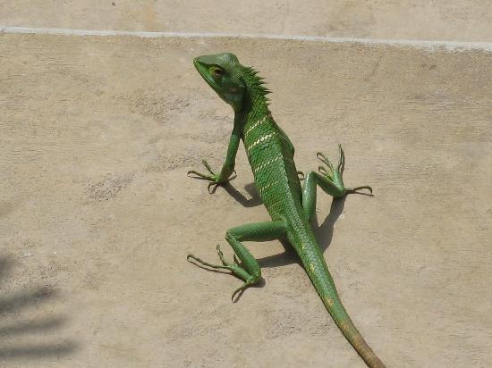 Tranquil Nest: Green Lizard