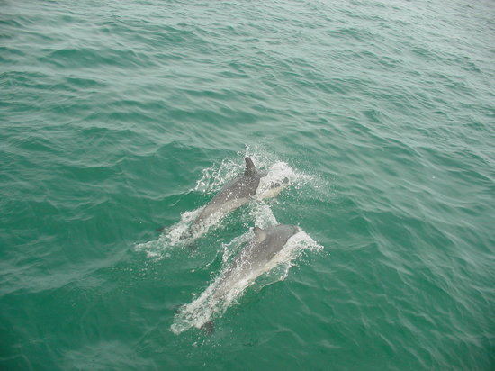 Tauranga, New Zealand: dolphin off the bow