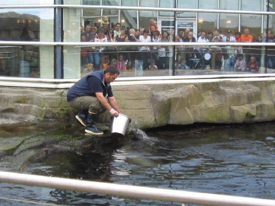 Brest, France: Robbenfütterung im Außenbasin