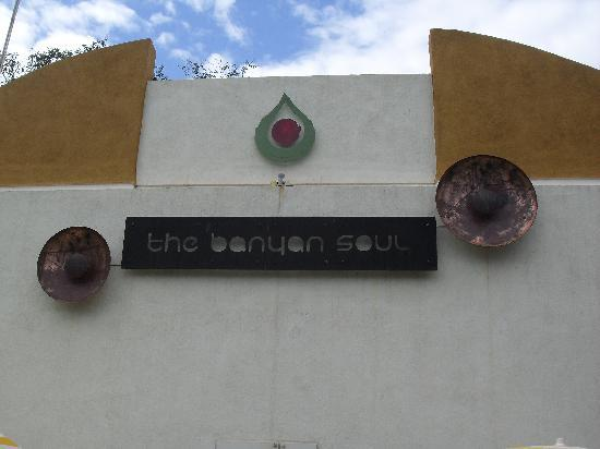 The Banyan Soul: Banyan soul at day