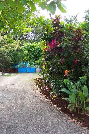 Iguanas & Congos Inn: driveway and garden